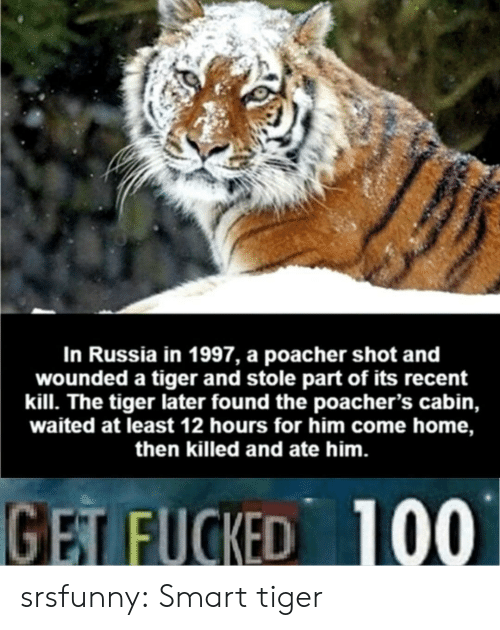 come-home: In Russia in 1997, a poacher shot and  wounded a tiger and stole part of its recent  kill. The tiger later found the poacher's cabin,  waited at least 12 hours for him come home,  then killed and ate him.  GET FUCKED 100 srsfunny:  Smart tiger