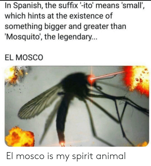mosquito: In Spanish, the suffix -ito' means 'small',  which hints at the existence of  something bigger and greater than  Mosquito, the legendary...  EL MOSCO El mosco is my spirit animal
