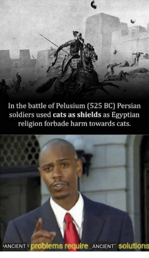 Persian: In the battle of Pelusium (525 BC) Persian  soldiers used cats as shields as Egyptian  religion forbade harm towards cats  ANCIENT problems require ANCIENT solutions
