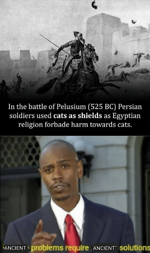 Persian: In the battle of Pelusium (525 BC) Persian  soldiers used cats as shields as Egyptian  religion forbade harm towards cats.  ANCIENT problems require ANCIENT Solutions