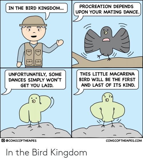 bird: In the Bird Kingdom