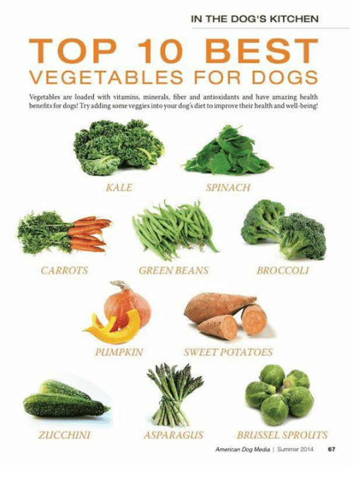Best Source Of Fiber For Dogs