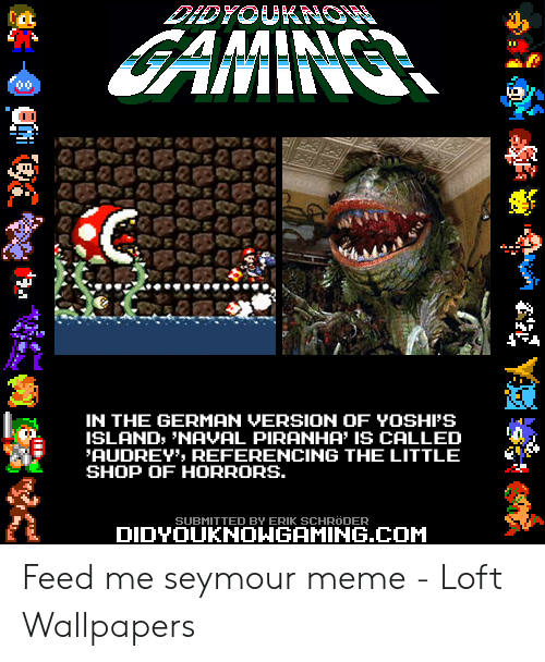feed me seymour: IN THE GERMAN VERSION OF YOSHFS  ISLAND, 'NAVAL PIRANHA' IS CALLED  AUDREY REFERENCING THE LITTLE  SHOP OF HORRORS  SUBMITTED BY ERIK SCHRODER  DIDYOUKNOWGAMING.COM Feed me seymour meme - Loft Wallpapers