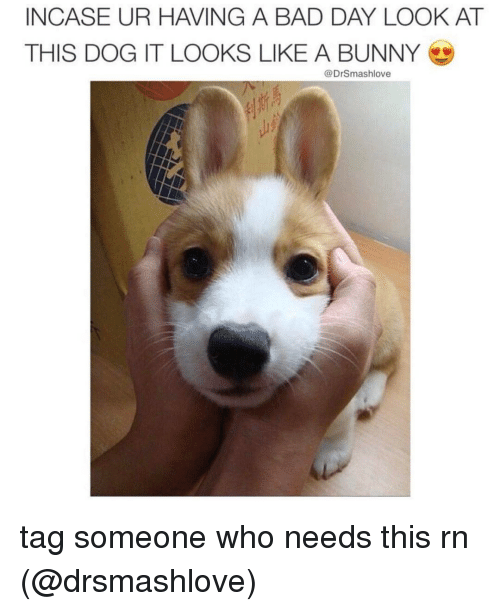 Look At This Dog: INCASE UR HAVING A BAD DAY LOOK AT  THIS DOG IT LOOKS LIKE A BUNNY  @DrSmashlove tag someone who needs this rn (@drsmashlove)