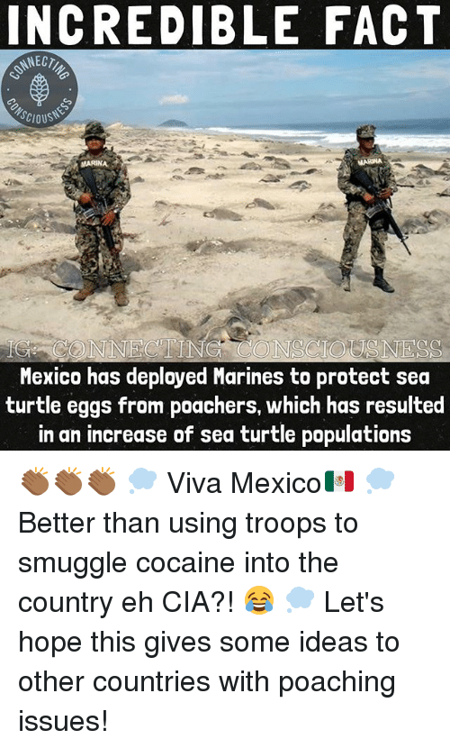 ehs: INCREDIBLE FACT  SCIOUS  MARINA  G CONNECTING CONSCIOSNESS  Mexico has deployed Marines to protect sea  turtle eggs from poachers, which has resulted  in an increase of sea turtle populations 👏🏾👏🏾👏🏾 💭 Viva Mexico🇲🇽 💭 Better than using troops to smuggle cocaine into the country eh CIA?! 😂 💭 Let's hope this gives some ideas to other countries with poaching issues!