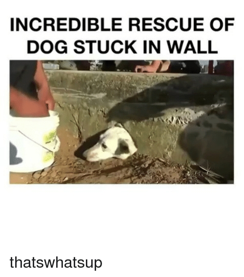 SIZZLE: INCREDIBLE RESCUE OF  DOG STUCK IN WALL thatswhatsup