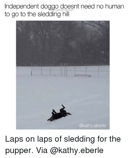 kathy: Independent doggo doesnt need no humarn  to go to the sledding hill  @kathy.eberle Laps on laps of sledding for the pupper. Via @kathy.eberle