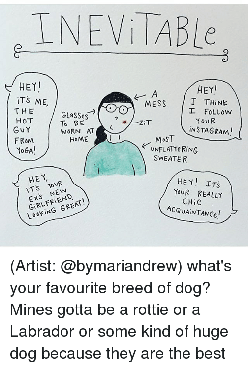 Memes, 🤖, and Labrador: INEVITABLe  HEYI  HEY  ITS ME,  T THINE  MESS  THE  I FOLLOW  GLasses  Hov R  HOT  TO BE  ZiT  WORN AT  NC  Gv Y  INSTAGRAMI  I I  HOME  MOST  FROM  UNFLATTeRiNG  YOGA  SWEATER  HEY  HEY I  ITS  YOUR  T S  YOUR REALLY  GIRLFRIEND  ACQUAINTANCel  LOOKIN (Artist: @bymariandrew) what's your favourite breed of dog? Mines gotta be a rottie or a Labrador or some kind of huge dog because they are the best