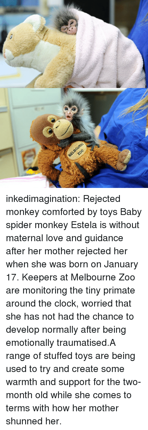 spider monkey: inkedimagination:  Rejected monkey comforted by toys Baby spider monkey Estela is without maternal love and guidance after her mother rejected her when she was born on January 17. Keepers at Melbourne Zoo are monitoring the tiny primate around the clock, worried that she has not had the chance to develop normally after being emotionally traumatised.A range of stuffed toys are being used to try and create some warmth and support for the two-month old while she comes to terms with how her mother shunned her.