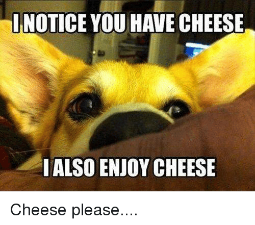 Memes, 🤖, and Cheese: INOTICE YOU HAVE CHEESE  I ALSO ENJOY CHEESE Cheese please....