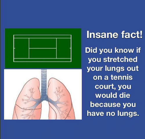 Lungs: Insane fact!  Did you know if  you stretched  your lungs out  on a tennis  court, you  would die  because you  have no lungs.