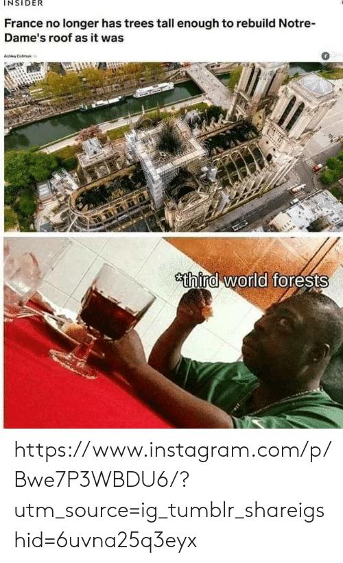 Tall Enough: INSIDER  France no longer has trees tall enough to rebuild Notre  Dame's roof as it was  0  Ashley Colman  sthind world forests https://www.instagram.com/p/Bwe7P3WBDU6/?utm_source=ig_tumblr_shareigshid=6uvna25q3eyx
