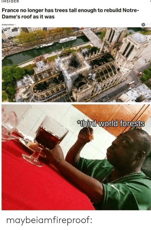 Tall Enough: INSIDER  France no longer has trees tall enough to rebuild Notre-  Dame's roof as it was  0  thira world forests maybeiamfireproof: