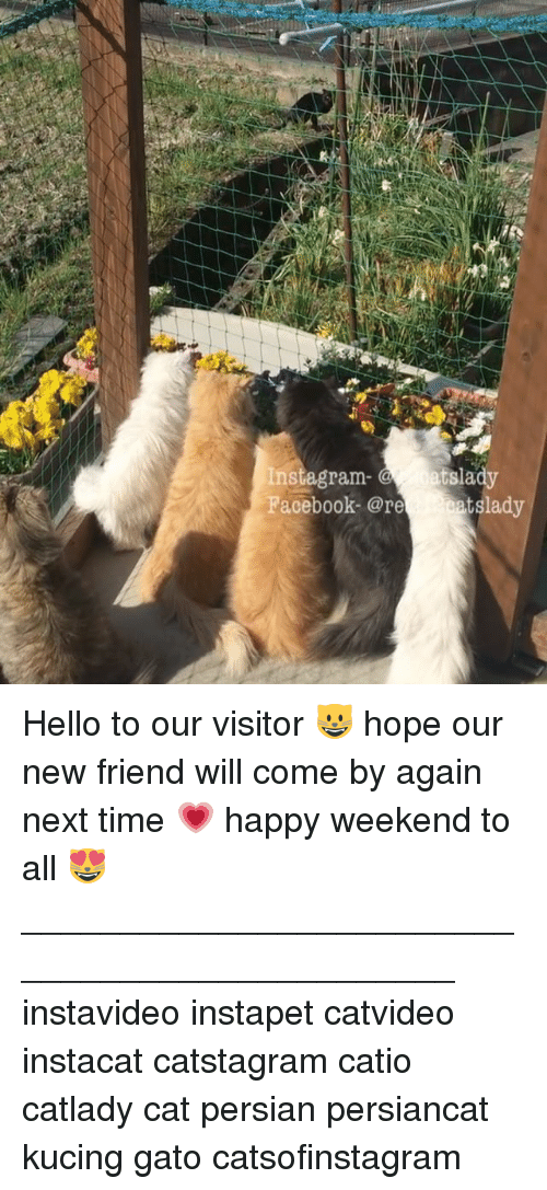 Insted: Inst agram  atslady  Facebook- @re  eats lady Hello to our visitor 😺 hope our new friend will come by again next time 💗 happy weekend to all 😻 _______________________________________________ instavideo instapet catvideo instacat catstagram catio catlady cat persian persiancat kucing gato catsofinstagram