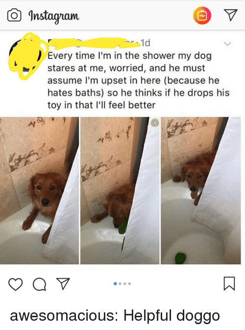 """Baths: Instagam  1d  Every time I'm in the shower my dog  stares at me, worried, and he must  assume l'm upset in here (because he  hates baths) so he thinks if he drops his  toy in that I'll feel better  yaV"""" awesomacious:  Helpful doggo"""