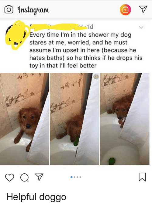 """Baths: Instagam  1d  Every time I'm in the shower my dog  stares at me, worried, and he must  assume lI'm upset in here (because he  hates baths) so he thinks if he drops his  toy in that I'll feel better  yaV"""" Helpful doggo"""