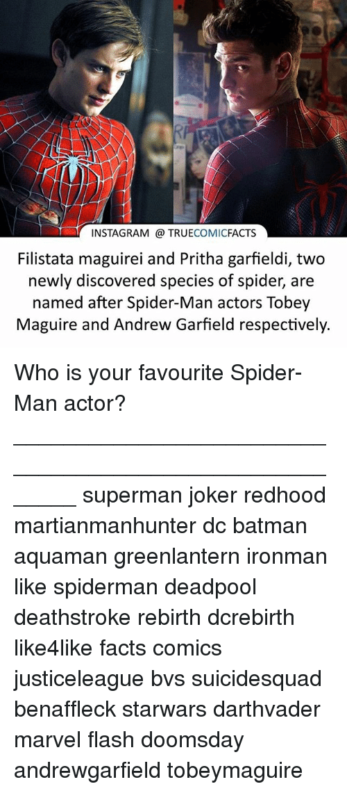 Andrew Garfield: INSTAGRAM a TRUE  COMIC  FACTS  Filistata maguirei and Pritha garfieldi, two  newly discovered species of spider, are  named after Spider-Man actors Tobey  Maguire and Andrew Garfield respectively. Who is your favourite Spider-Man actor? ⠀_______________________________________________________ superman joker redhood martianmanhunter dc batman aquaman greenlantern ironman like spiderman deadpool deathstroke rebirth dcrebirth like4like facts comics justiceleague bvs suicidesquad benaffleck starwars darthvader marvel flash doomsday andrewgarfield tobeymaguire