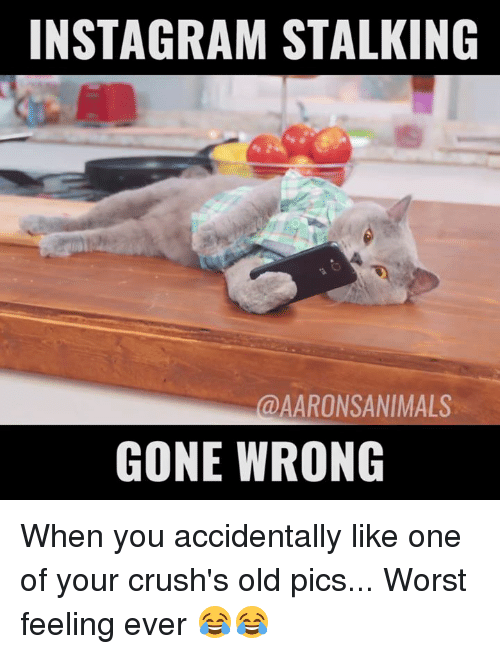 Crush, Dank, and Instagram: INSTAGRAM STALKING  @AARON SANIMALS  GONE WRONG When you accidentally like one of your crush's old pics... Worst feeling ever 😂😂