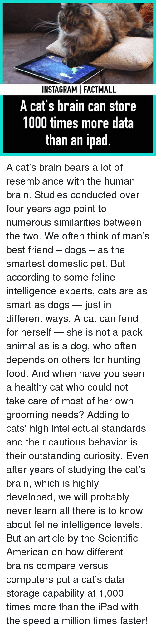 Best Friend, Brains, and Cats: INSTAGRAMI FACTMALL  A cat's brain can store  1000 times more data  than an ipad A cat's brain bears a lot of resemblance with the human brain. Studies conducted over four years ago point to numerous similarities between the two. We often think of man's best friend – dogs – as the smartest domestic pet. But according to some feline intelligence experts, cats are as smart as dogs — just in different ways. A cat can fend for herself — she is not a pack animal as is a dog, who often depends on others for hunting food. And when have you seen a healthy cat who could not take care of most of her own grooming needs? Adding to cats' high intellectual standards and their cautious behavior is their outstanding curiosity. Even after years of studying the cat's brain, which is highly developed, we will probably never learn all there is to know about feline intelligence levels. But an article by the Scientific American on how different brains compare versus computers put a cat's data storage capability at 1,000 times more than the iPad with the speed a million times faster!