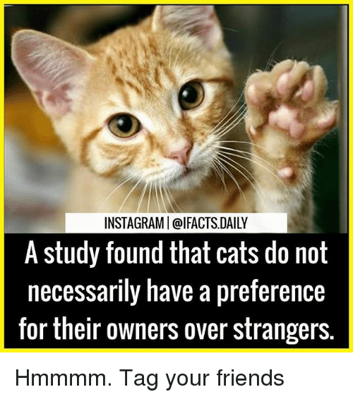Cats, Friends, and Memes: INSTAGRAMI@IFACTS DAILY  A study found that cats do not  necessarily have a preference  for their owners over strangers Hmmmm. Tag your friends