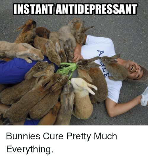Antidepressant: INSTANT ANTIDEPRESSANT <p>Bunnies Cure Pretty Much Everything.</p>
