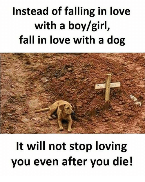 Instead Of Falling In Love With A Boygirl Fall In Love With A Dog Wi