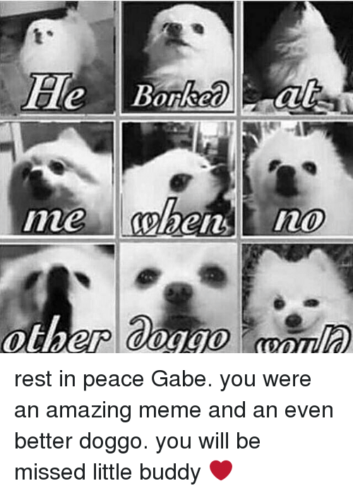 Gabe: Inte  rchen  no rest in peace Gabe. you were an amazing meme and an even better doggo. you will be missed little buddy ❤