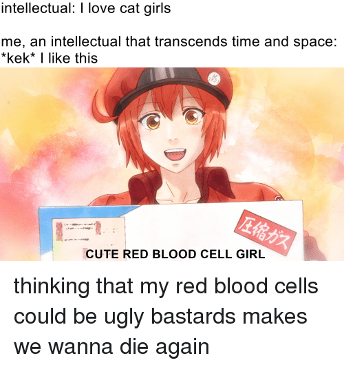 Anime, Cute, and Girls: intellectual: I love cat girls  me, an intellectual that transcends time and space:  kek* I like this  AE  CUTE RED BLOOD CELL GIRL