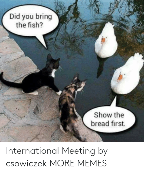 International: International Meeting by csowiczek MORE MEMES