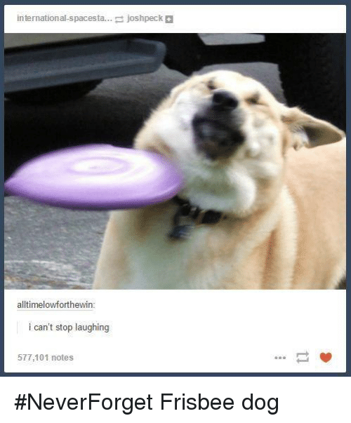 Josh Peck: international spacesta  josh peck  alltimelowforthewin  i can't stop laughing  577,101 notes #NeverForget Frisbee dog