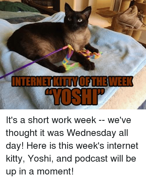 "Short Work Week: INTERNETKITTVOFTHEWEEK  ""YOSHI It's a short work week -- we've thought it was Wednesday all day!  Here is this week's internet kitty, Yoshi, and podcast will be up in a moment!"
