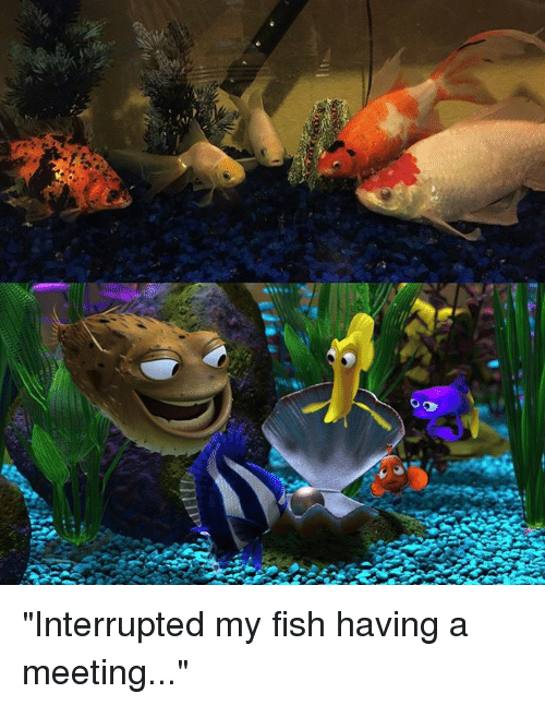 Interrupted My Fish Having A Meeting Dank Meme On Sizzle