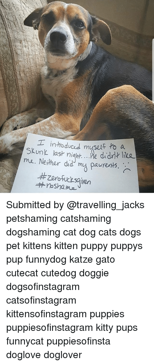 Nethers: intodvcd muself to a  ma. Nether did mu paurents  Zorofucksaien Submitted by @travelling_jacks petshaming catshaming dogshaming cat dog cats dogs pet kittens kitten puppy puppys pup funnydog katze gato cutecat cutedog doggie dogsofinstagram catsofinstagram kittensofinstagram puppies puppiesofinstagram kitty pups funnycat puppiesofinsta doglove doglover