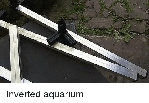 25 best memes about pond pond memes for Inverted fish tank