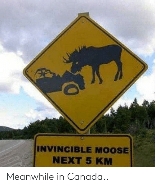 meanwhile in canada: INVINCIBLE MOOSE  NEXT 5 KM Meanwhile in Canada..