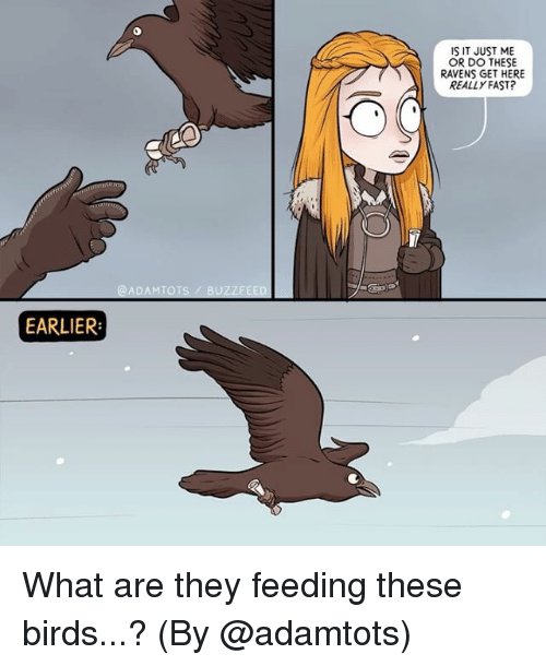 Memes, Birds, and Buzzfeed: IS IT JUST ME  OR DO THESE  RAVENS GET HERE  REALLY FAST?  @ADAMTOTS/ BUZZFEED  EARLIER What are they feeding these birds...? (By @adamtots)