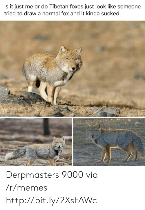 Memes, Http, and Fox: Is it just me or do Tibetan foxes just look like someone  tried to draw a normal fox and it kinda sucked. Derpmasters 9000 via /r/memes http://bit.ly/2XsFAWc
