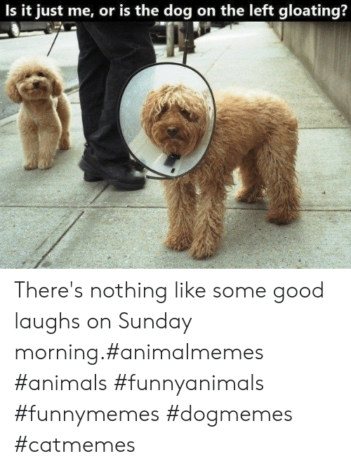 Sunday Morning: Is it just me, or is the dog on the left gloating? There's nothing like some good laughs on Sunday morning.#animalmemes #animals #funnyanimals #funnymemes #dogmemes #catmemes