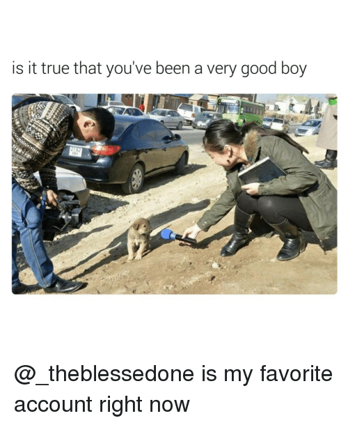 Funny, Account, and Now: is it true that you've been a very good boy @_theblessedone is my favorite account right now