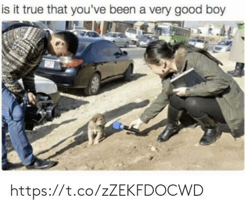 True That: is it true that you've been a very good boy https://t.co/zZEKFDOCWD