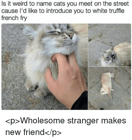 Cats, Weird, and White: Is it weird to name cats you meet on the street  cause l'd like to introduce you to white truffle  french fry <p>Wholesome stranger makes new friend</p>