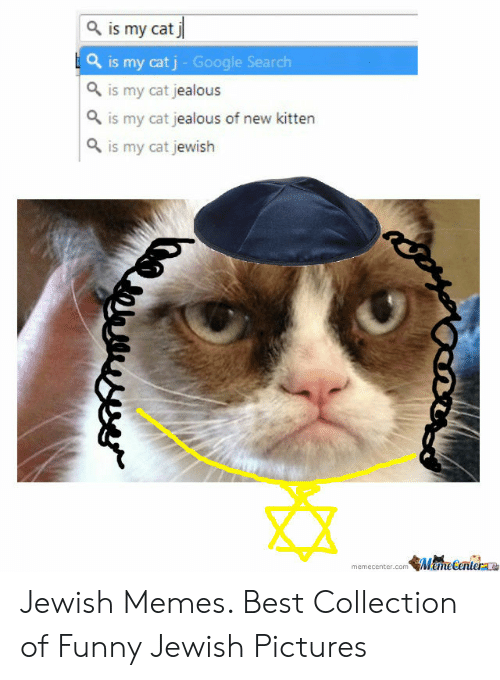 Jewish Memes: is my cat j  Q is my cat j - Google Search  Q is my cat jealous  Q is my cat jealous of new kitten  Q is my cat jewish  memecenter.comMemeCertera Jewish Memes. Best Collection of Funny Jewish Pictures