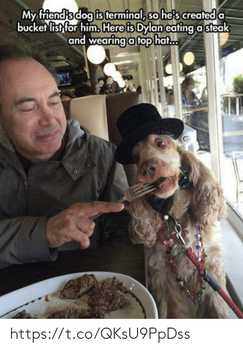 Bucket list: is terminal, so he's created  My friendsdog a  bucket list for him. Here is Dylan eating a steak  and wearingafophat https://t.co/QKsU9PpDss