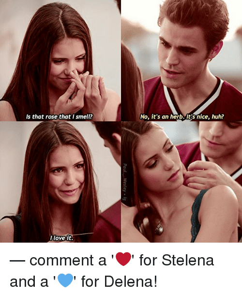 Huh, Love, and Memes: Is that rose that I smell?  No, it's an herb. Its nice, huh?  love it — comment a '❤️' for Stelena and a '💙' for Delena!