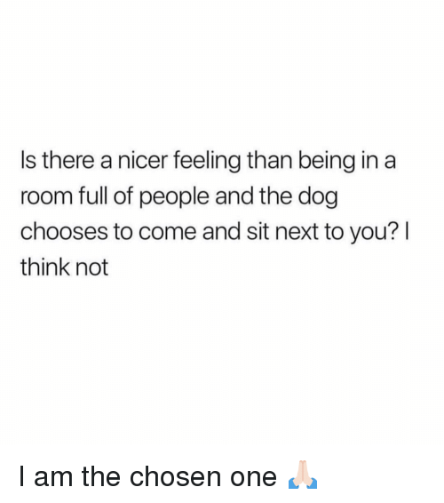 Girl Memes, Dog, and Next: Is there a nicer feeling than being in a  room full of people and the dog  chooses to come and sit next to you? l  think not I am the chosen one 🙏🏻