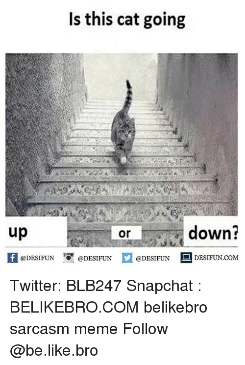 Be Like, Meme, and Memes: Is this cat going  up  down?  or  1  @DESIFUN @DESIFUN @DESIFUN-DESIFUN.COM Twitter: BLB247 Snapchat : BELIKEBRO.COM belikebro sarcasm meme Follow @be.like.bro
