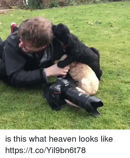 Heaven, Girl Memes, and What: is this what heaven looks like https://t.co/Yil9bn6t78