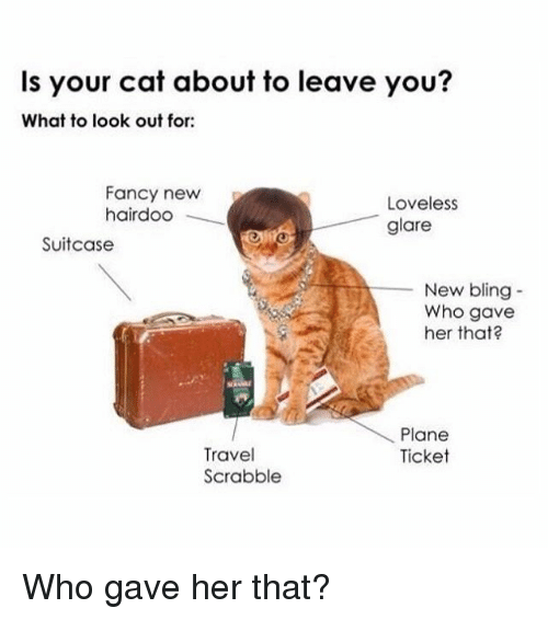 Glaring: Is your cat about to leave you?  What to look out for  Fancy newP  hairdoo  Loveless  glare  Suitcase  New bling-  Who gave  her that?  Plane  Ticket  Travel  Scrabble Who gave her that?