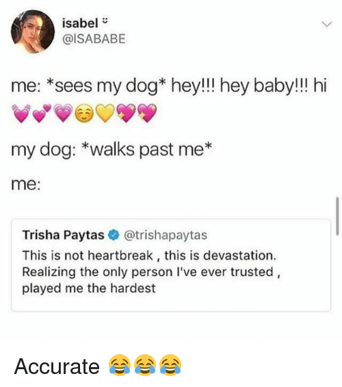 """Funny, Baby, and Dog: isabel""""  @ISABABE  me: *sees my dog* hey!!! hey baby!!! hi  my dog: *walks past me*  me:  Trisha Paytas @trishapaytas  This is not heartbreak, this is devastation.  Realizing the only person I've ever trusted,  played me the hardest Accurate 😂😂😂"""