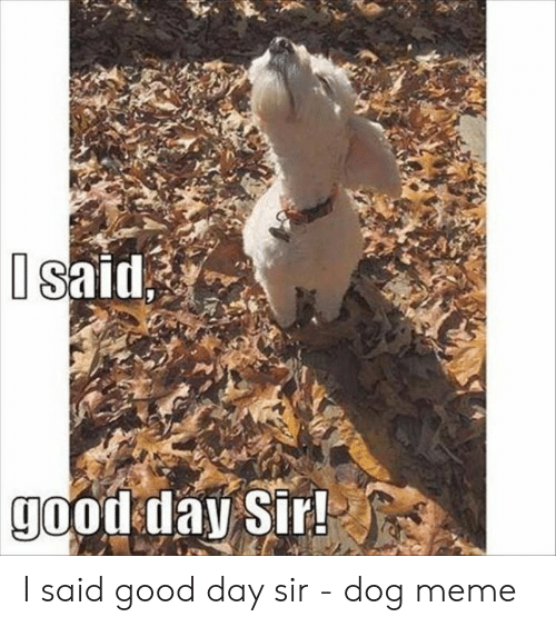 I Said Good Day Meme: Isaid  good day Sir! I said good day sir - dog meme